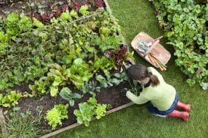 benefits of a vegetable garden