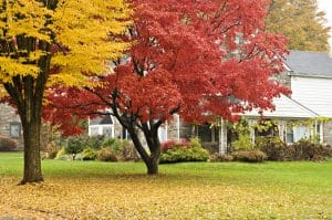 autumn landscaping & gardening tips image