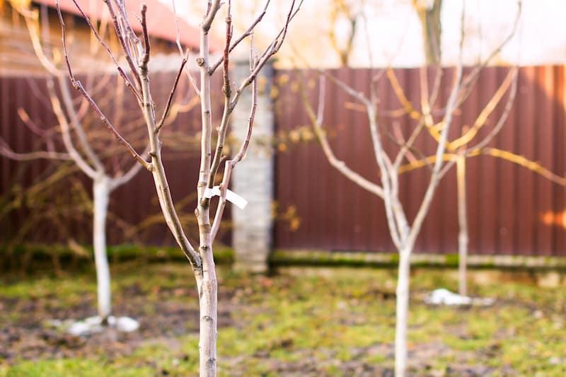 gardening tips for winter