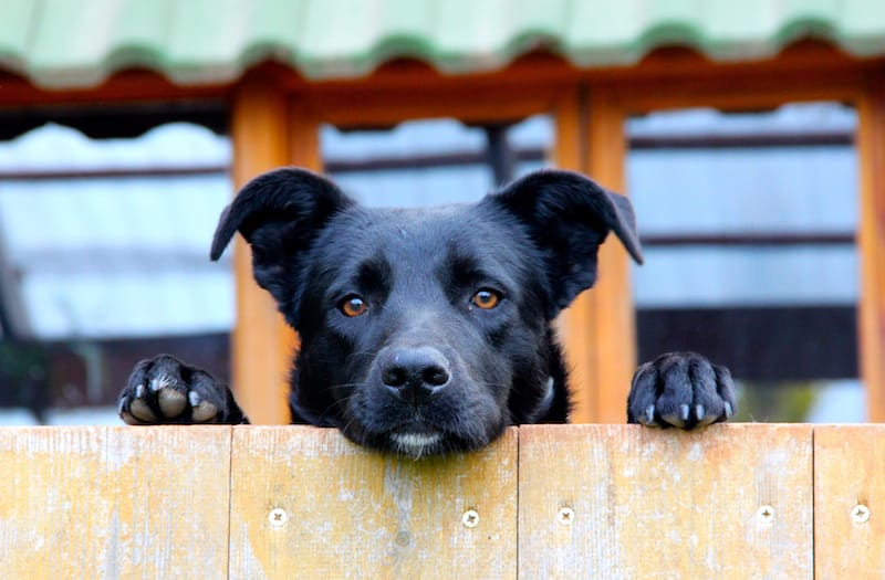 What to Consider When Choosing a Fence for a Big Dog