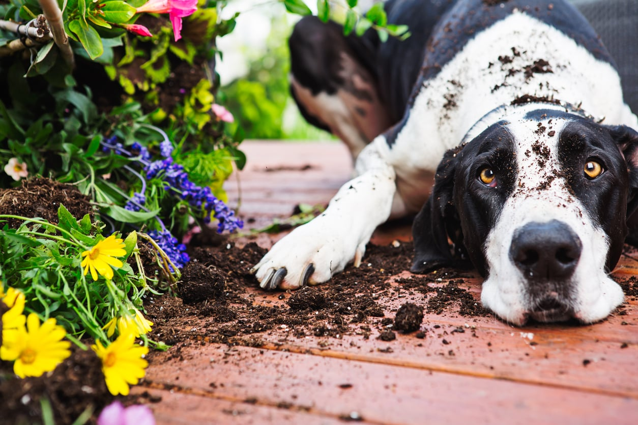 Preparing Your Yard for a New Dog image