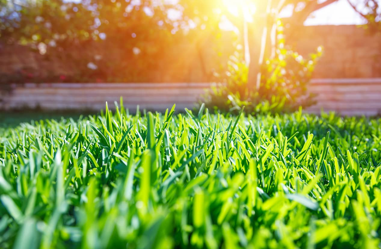 How to Choose the Best Grass for Your Lawn