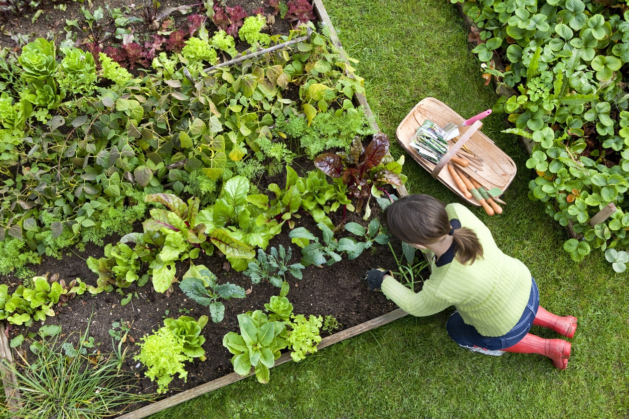 Hints & Tips for Edible Gardening in Melbourne