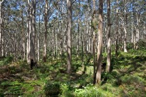 Landscaping tips for fire rated and bushfire prone areas
