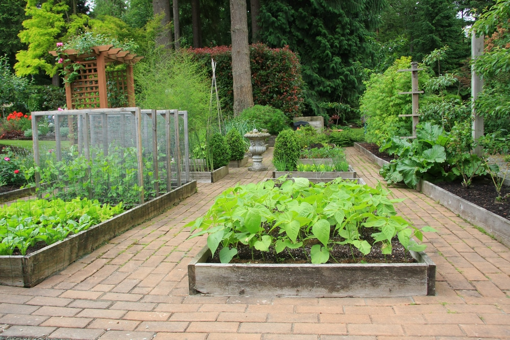 Why you plant a vegetable garden