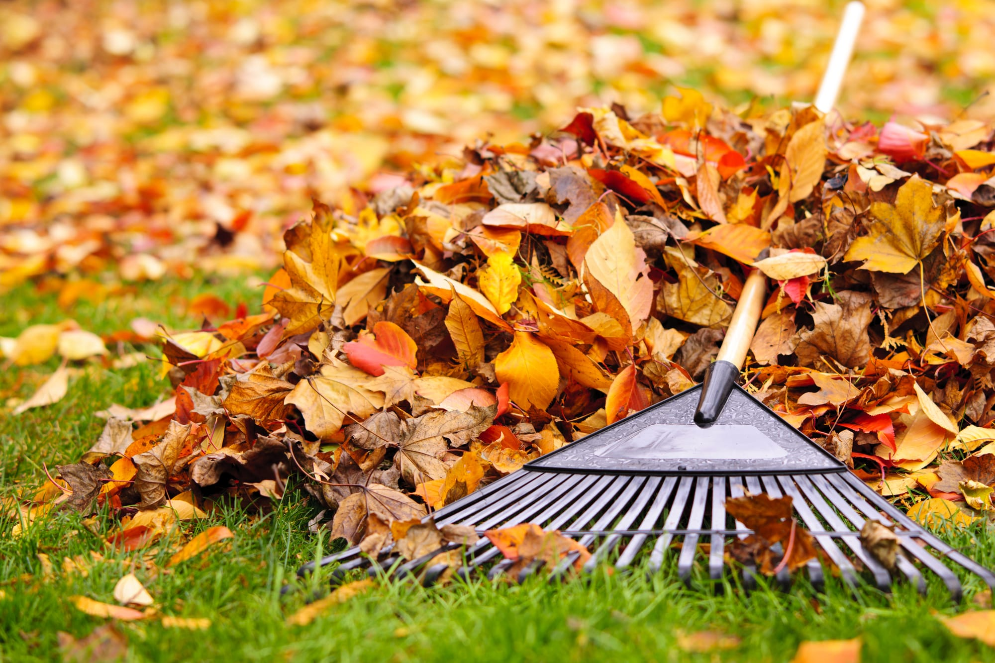 gardening tips for autumn