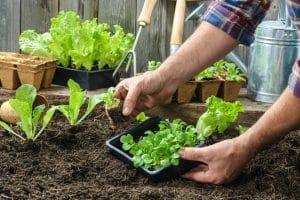 gardening-ideas-lockdown
