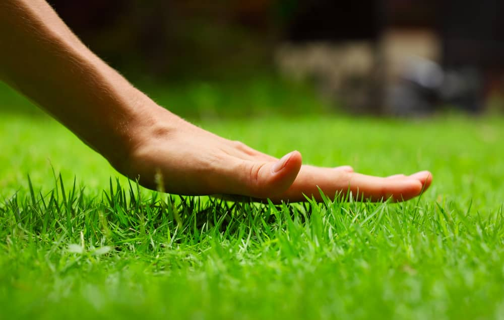 top lawn care questions answered